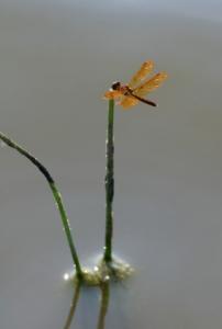iStock_dragonfly